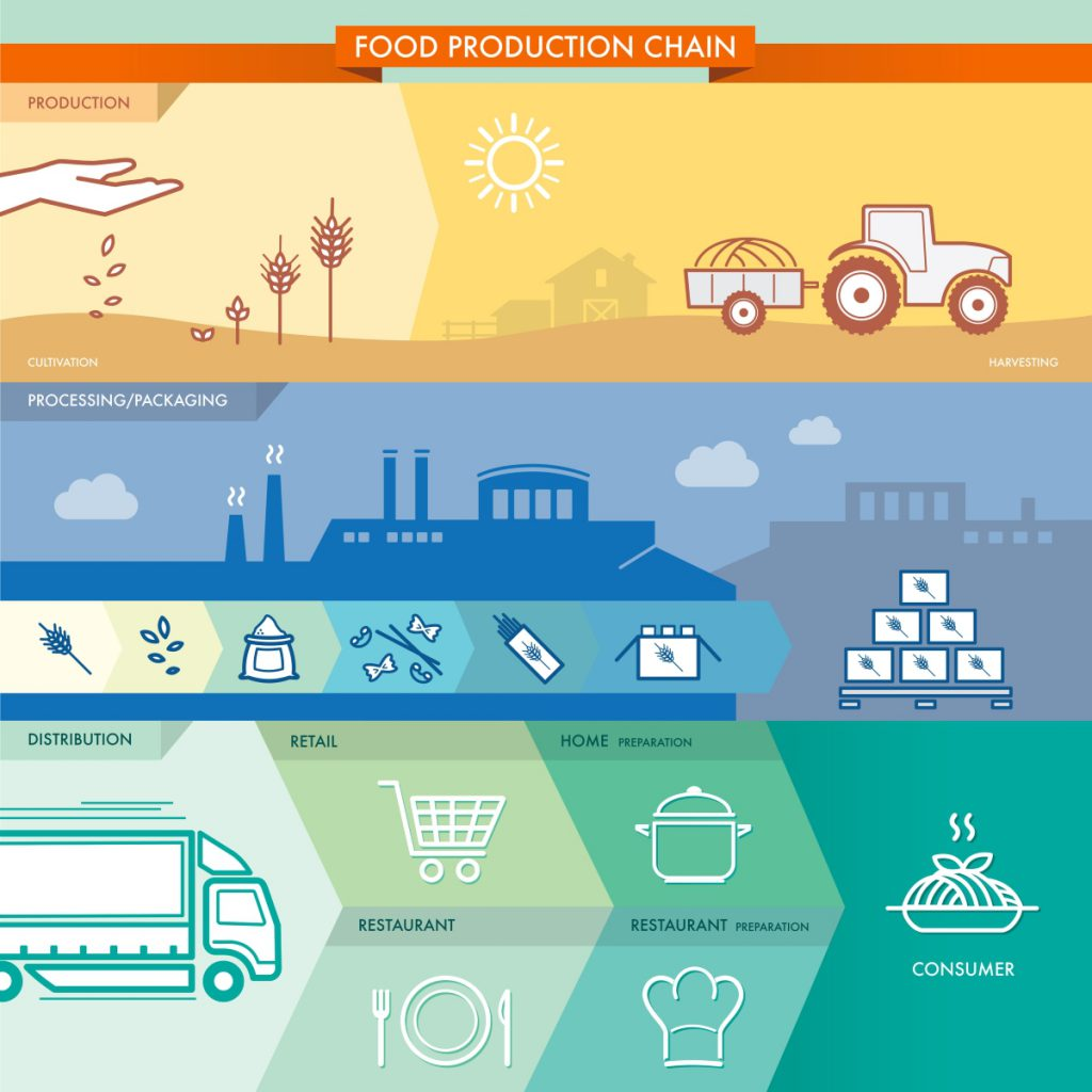 The Food Production Chain infographic