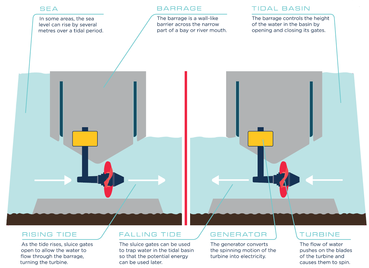 An infographic showing how tidal generated power works.