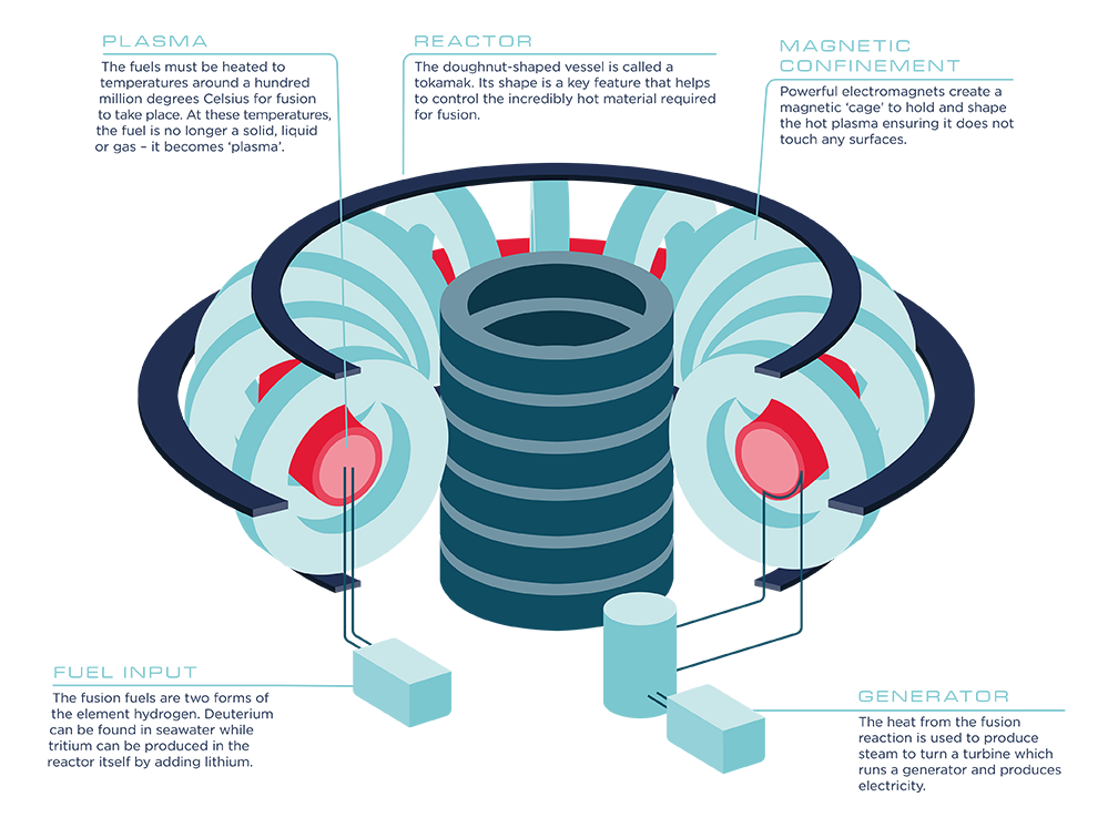 An infographic showing a tokomak reactor